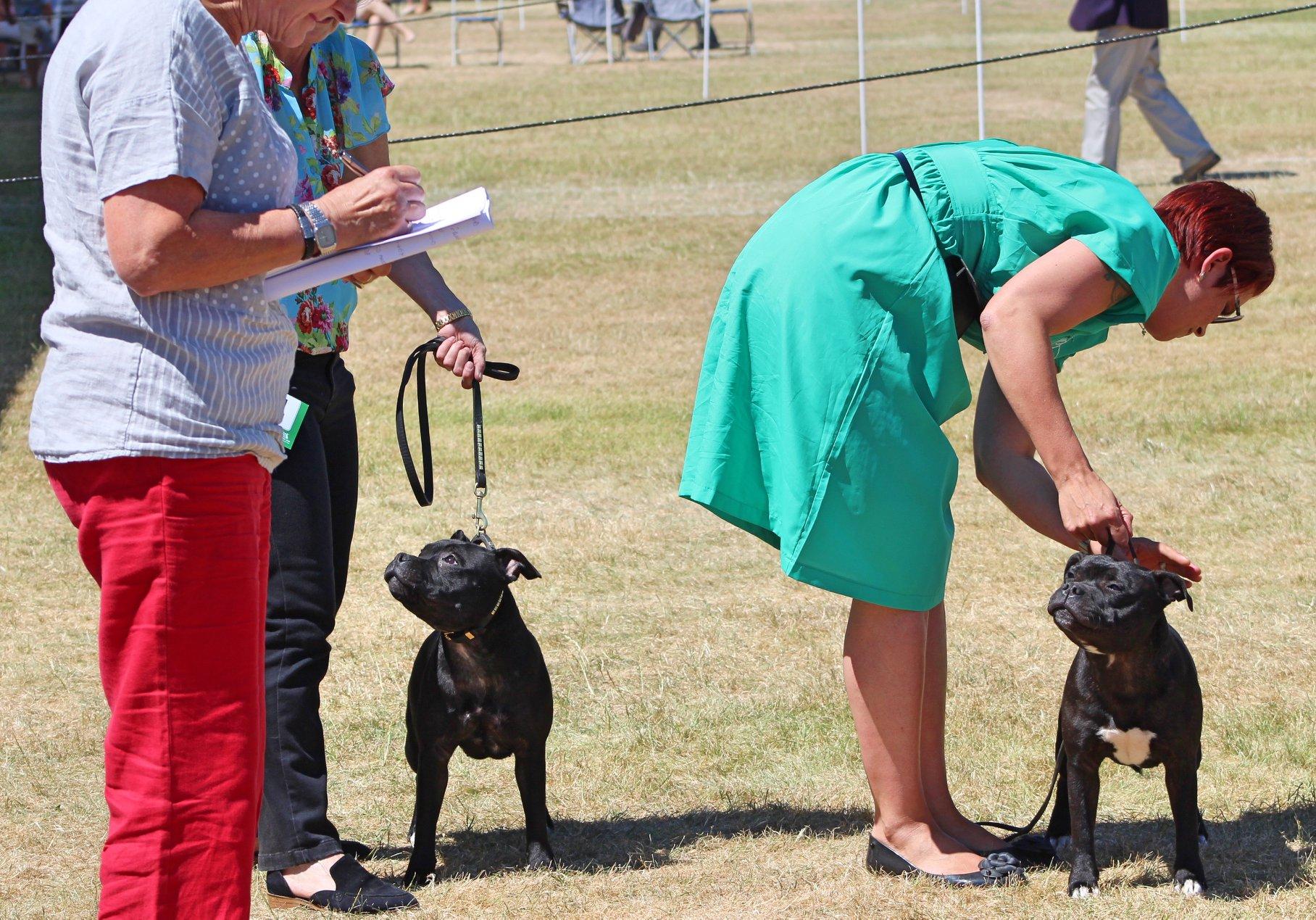 Windsor Dog Show Results